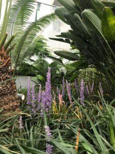 DMP-LLP Sky Garden